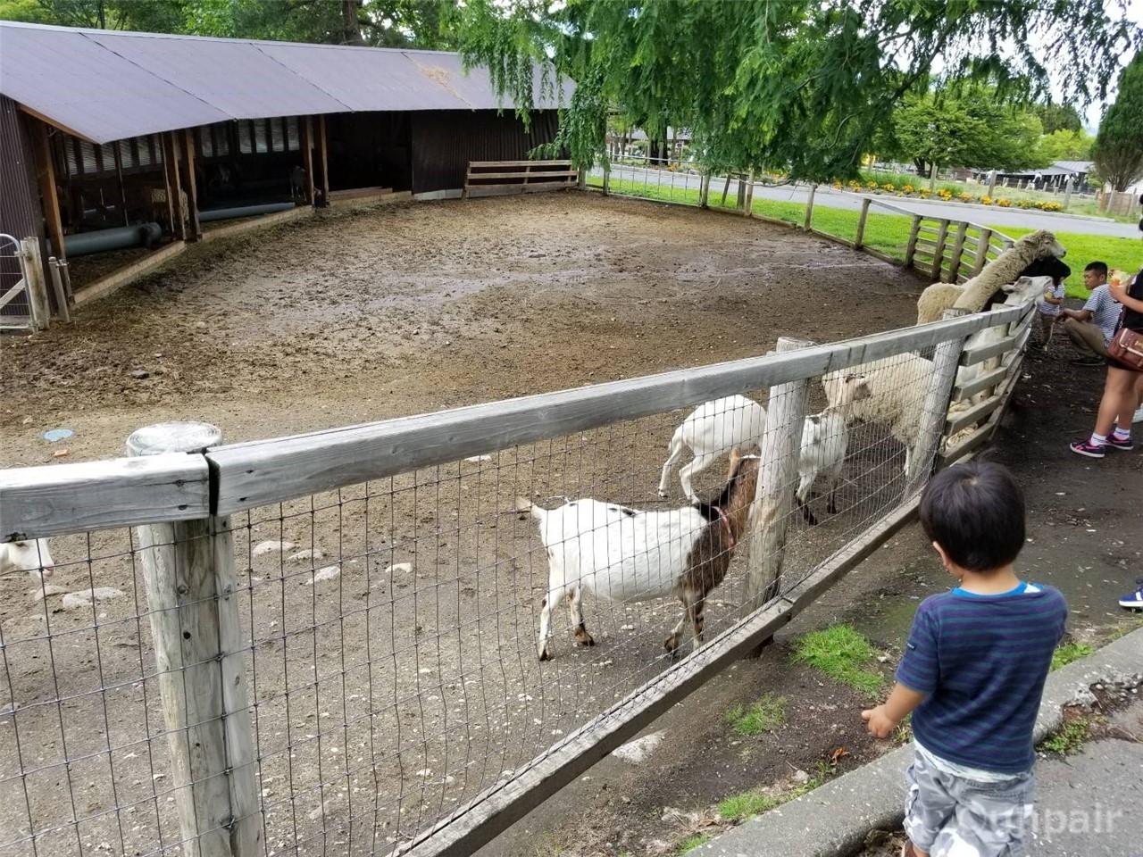 ヒツジとヤギ