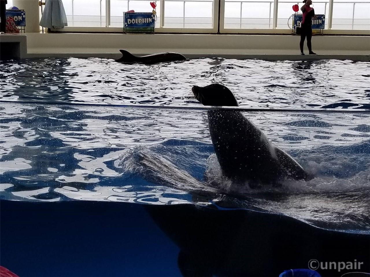 イルカの上に乗るアシカ